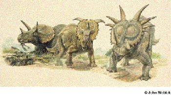 pachyrhinosaurus skull  ... left to right, Triceratops