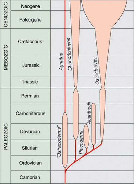 Geologic ranges of the five classes of fishes