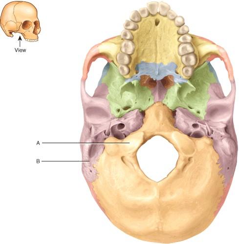 ch07, Human Body
